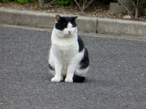 stray cat in street