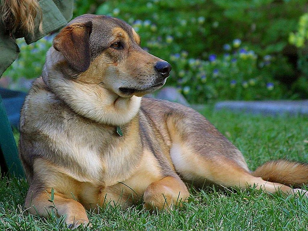 Recognizing Spring Allergies in Your Pets