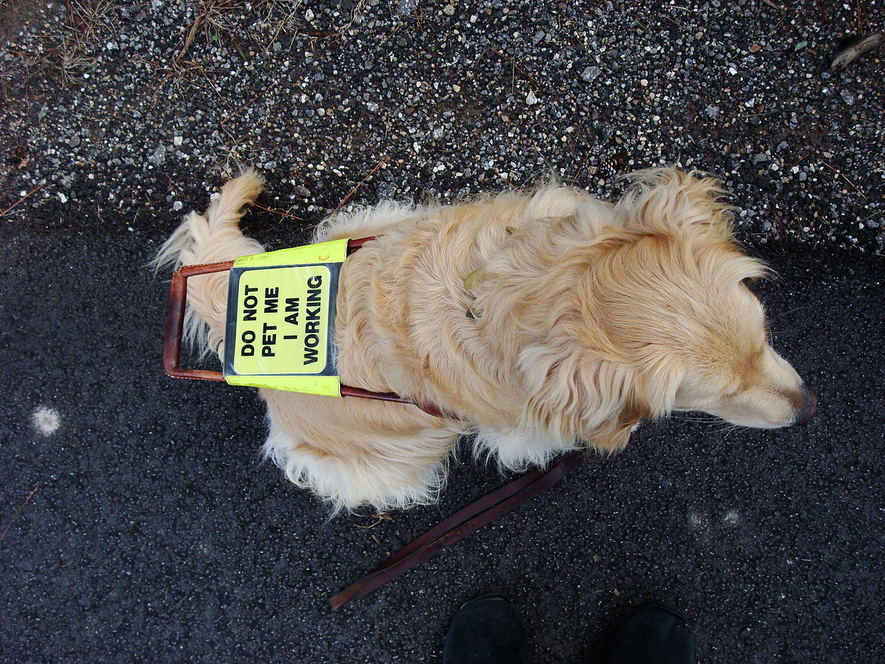 International Assistance Dog Week: Recognizing These Hard Workers