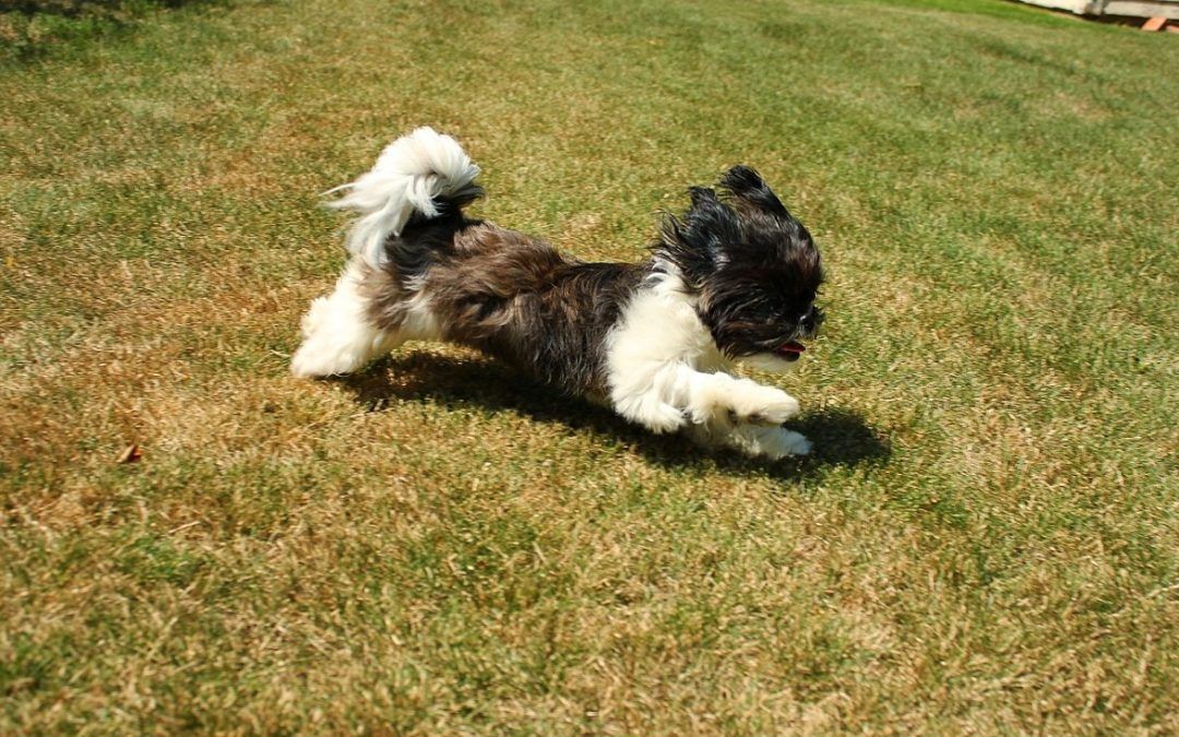 The Benefits of Keeping Your Pet Active