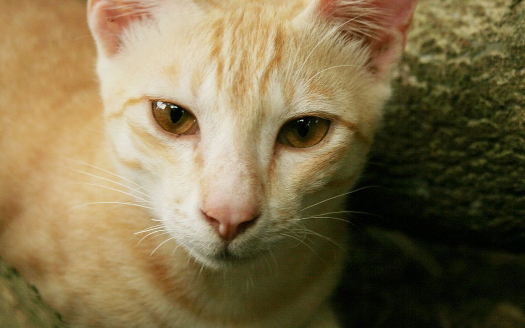 Senior Cat Care: Things to Consider